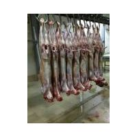 HALAL FROZEN SHEEP CARCASS