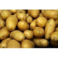 Fresh Farm Washed Potatoes thumbnail image