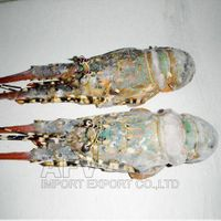 Frozen Lobster Viet Nam, AFV Import Export Company thumbnail image