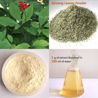Panax Ginseng Leaf Extract Re>20%HPLC Ginsenoside thumbnail image