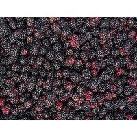 supply frozen blackberry