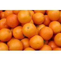 Fresh Navel/ Valencia Oranges thumbnail image