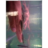Doctor Fish Spa Treatment Project--Doctor Fish