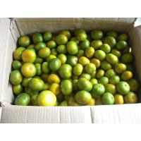 sell Precocious Nanfeng Oranges