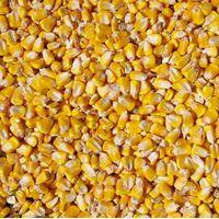 Sell Yellow Corn for Animal Feed thumbnail image