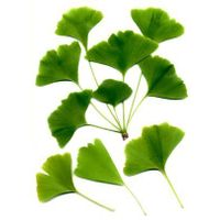 Ginkgo Powder, Extract, Concentrate, Plant Extract, Capsules, Tablets, Leaf Powder