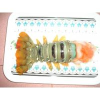 FROZEN SPINY LOBSTER & TAILS FROM VIETNAM thumbnail image