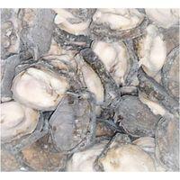 Chile Locos Abalone