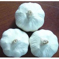 Chinese fresh garlic thumbnail image