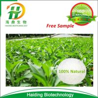 Chinese Manufacturer Supply Organic Stevia Extract 90%, 95%, 97%, 98%,99% Stevioside Reb A