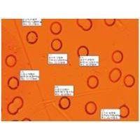 Polycarbonate Membrane Filter