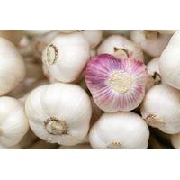 Cooking essential Vegetable Fresh Chinese Garlic