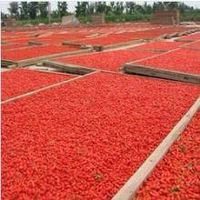 Supply  High Quality Dried goji berries fruit /Chinese wolfberry thumbnail image