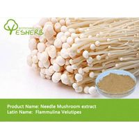 free sample high quality Needle Mushroom Powder