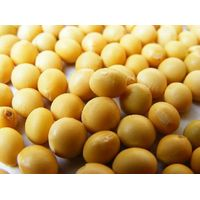 Soybean Extract 100%pure powder 20%,40%,80% Isflavone thumbnail image