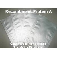 Recombinant Protein A, Protein A