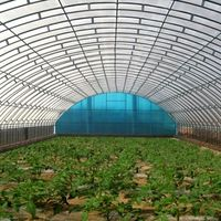 Single Type Winter Greenhouse