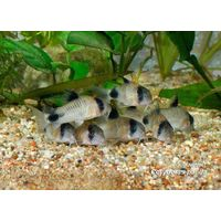 Live Tropical fish Wholesale