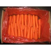 fresh and frozen carrot