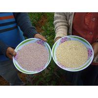 Organic and Conventional Quinoa
