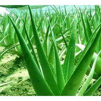 selling  Aloe emodin 95%98%  ( CAS NO.481-72-1)