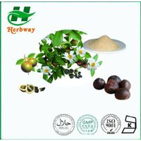 Green Tea Seed Extract