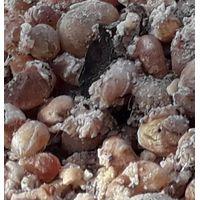 Acacia Seyal / Gum Arabic thumbnail image