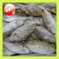 New Landing Fresh Frozen Food IQF W/R Rabbit Fish (Siganus Canaliculatus)