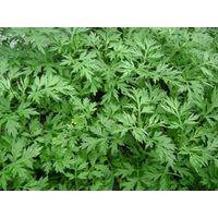 Folium Artemisiae Argyi P.E. test by TLC
