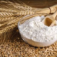 Wheat flour from Brazil Factory thumbnail image