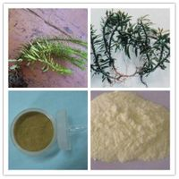 Huperzine Serrate Extract