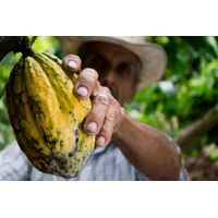 Cocoa Beans and Cocoa Powder for Sale (Cacao)