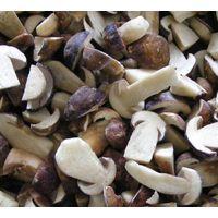 Frozen Mushroom Fungus Boletus Edulis