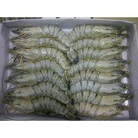 Frozen Black tiger HOSO Shrimp