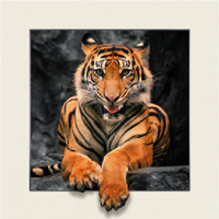 Cheap Factory Price 3d lenticular picture frame 3d beautiful picture scenery 3d animal picture