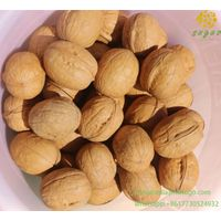 2020 Wholesale Best Price Shell Green Walnuts Peeled for Sale