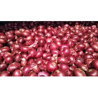 Red Onion thumbnail image
