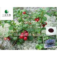 Vaccinium vitis-ideea (sales05@3wbio.com)