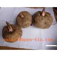 supply best quality Konjac Extract 90.0% Glucomannan Test by UV