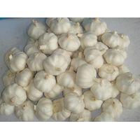 fresh garlic thumbnail image