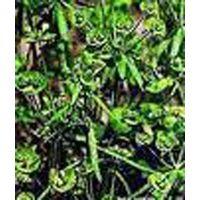 Euphorbia Extract