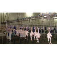 chicken duck goose slaughterhouse abattoir slaughter machines thumbnail image