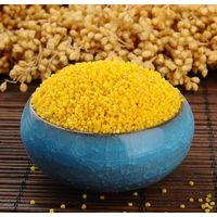 yellow millet thumbnail image