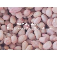 wholesale of Chinese Peanut Handpicked 35/40, 40/50,50/60, 60/70