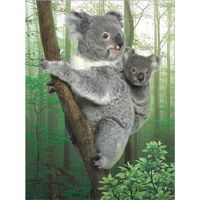 Special lifelive 3d lenticular poster of koala