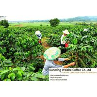 The larget coffee beans Export compnay of China