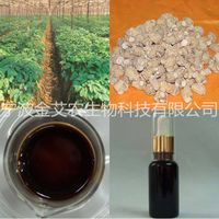 American Ginseng Root Oil