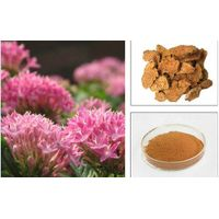 Body energy Rhodiola rosea extract 1% Rhodiola glucoside