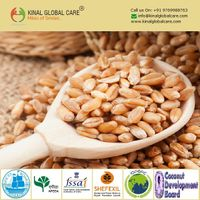 Best Quality Indian Wheat thumbnail image