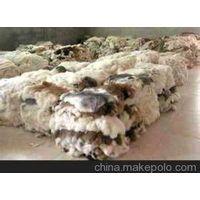 fur  blanket thumbnail image